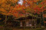 尾道から1時間圏内で行ける紅葉スポット沸通寺と今高野山に行ってきた話