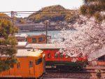 【尾道】桜さんぽ2020 浄土寺